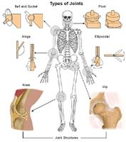 Illustration of types of joints