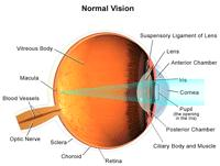 Illustration demonstrating normal vision